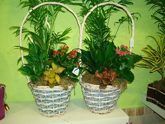 Composiciones de plantas naturales para aniversarios, cumpleaños... a 21 €