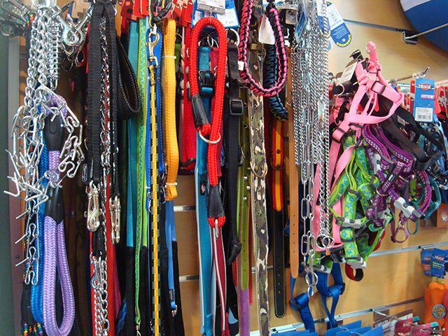 Oferta especial 1er aniversario. 30% descuento en collares, arneses y correas.