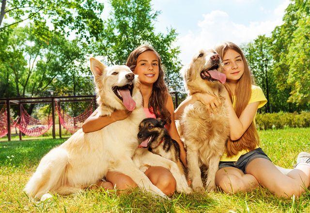 2ª feria de adopciones en Alcorcón organizada por La casita de los animales