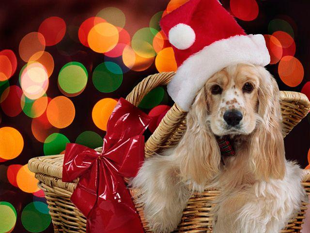 """plan """"cesta de navidad para tu mascota"""""""
