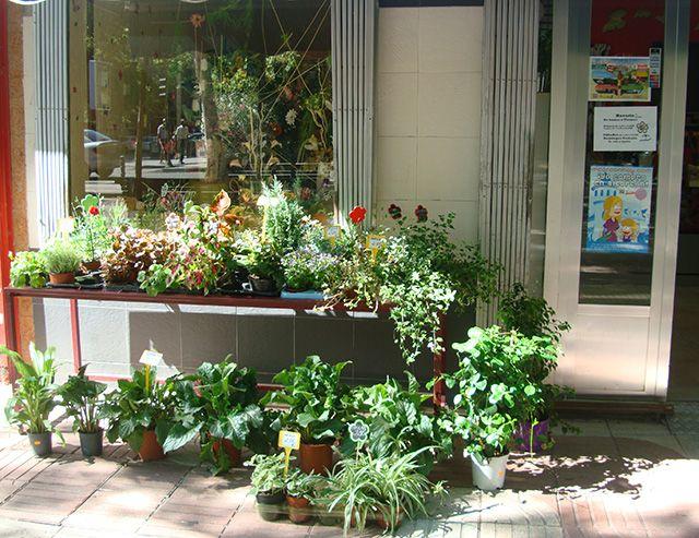 floristeria dos brotes