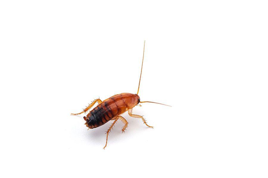Plaga de insectos