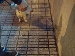 ESMASA Alcorcón inicia una campaña de limpieza en relación con las mascotas