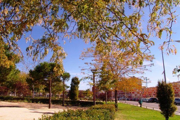 Poda y cuidados del arbolado de Alcorcón por 130.000 euros