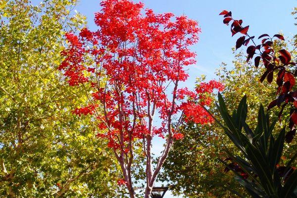 El objetivo es recuperar los árboles talados en los últimos años. 80.000 euros para la plantación de árboles en Alcorcón.