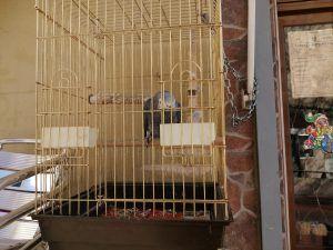 Aparece el loro robado en Alcorcón