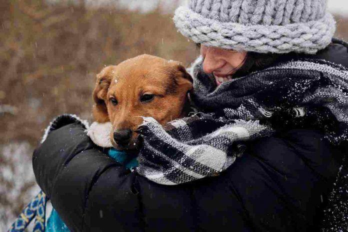 Adopción de animales online en Alcorcón