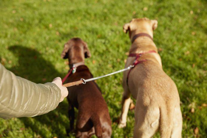 Un cartel anima a los vecinos de Alcorcón a recoger los excrementos caninos