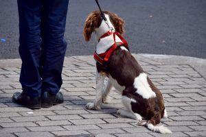 Un perro ataca a un agente de policía en Alcorcón