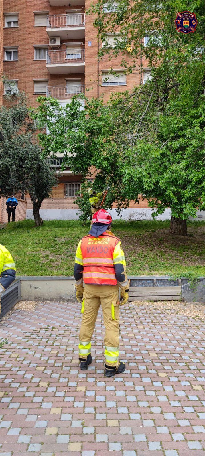 Las lluvias provocan diversas incidencias en Alcorcón