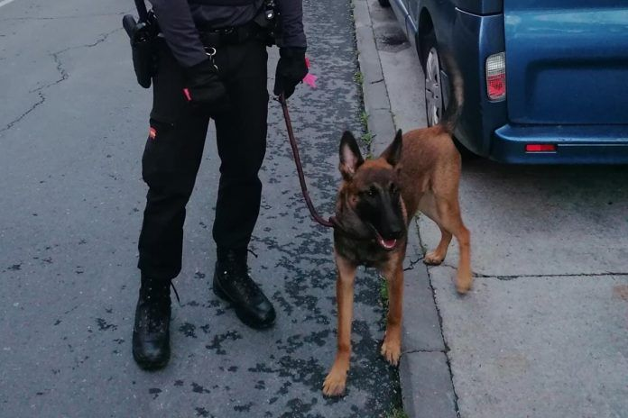 La Policía recupera un coche robado en el que habían abandonado a un perro en Alcorcón