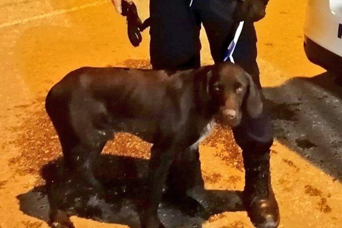 La Policía rescata a dos perros en Alcorcón