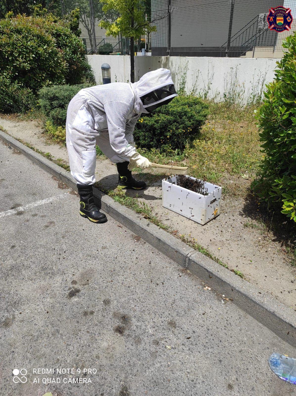 Los Bomberos de Alcorcón intervienen en incendios, accidentes y con abejas esta semana
