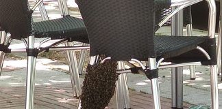 Retiran un enjambre de abejas en un bar de Alcorcón