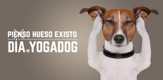 Yogadog en X-Madrid en Alcorcón el 12 y 13 de junio