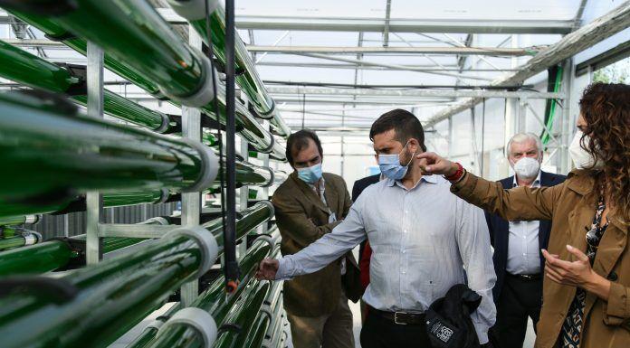 Alcorcón tendrá un edificio que reciclará el aire a través de microalgas